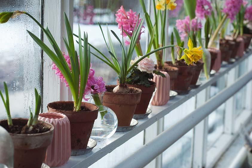 flower-plants-mondev.jpg#asset:30990