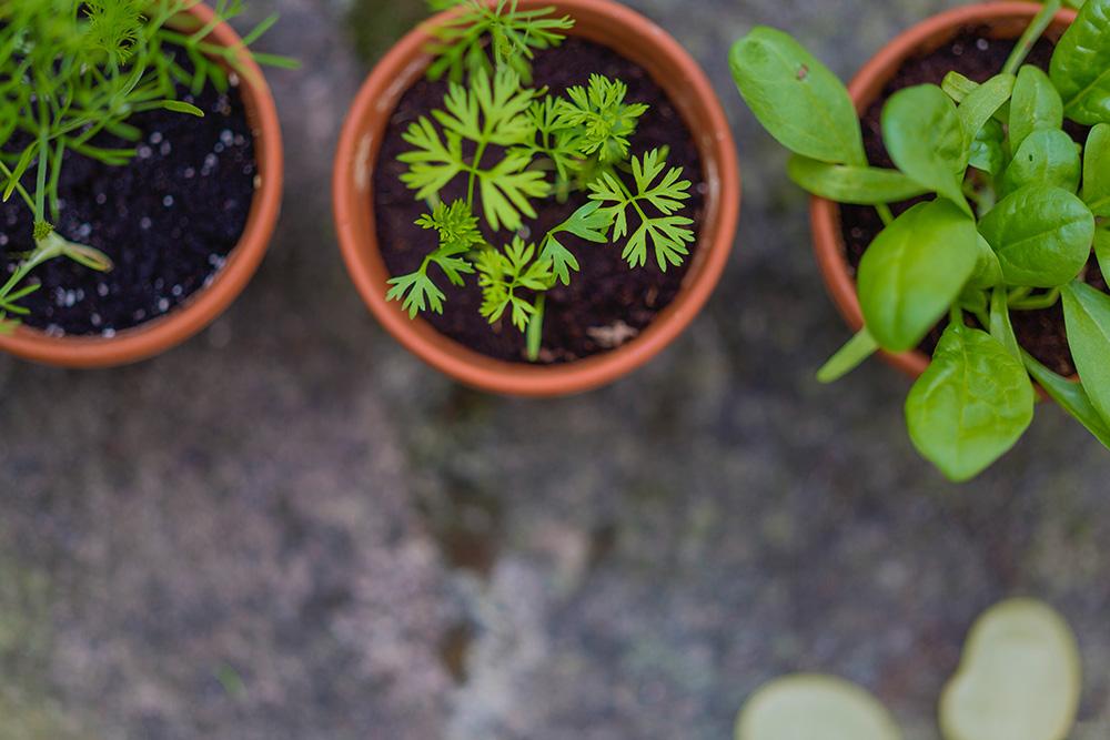 110-fines-herbes.jpg