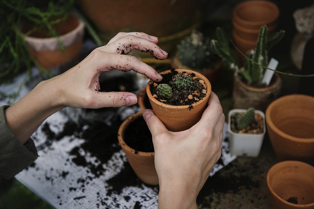12-plantes.jpg