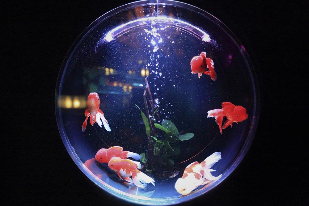 16-poisson.jpg